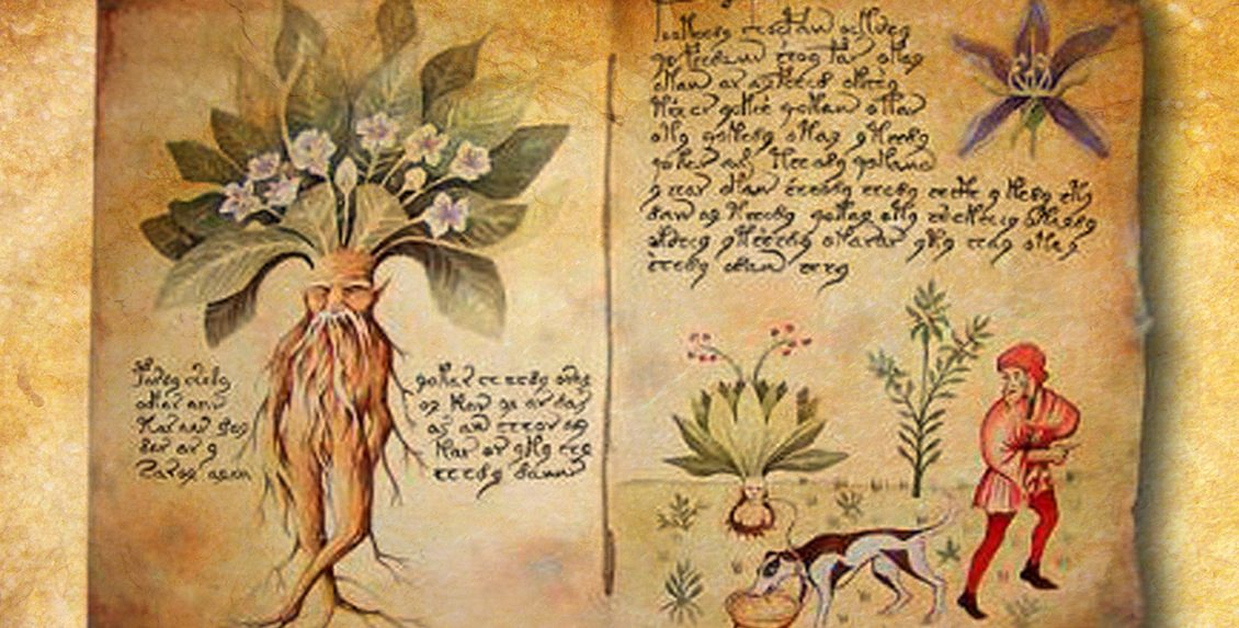 Магическое растение мандрагора